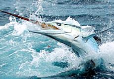 bottom_fishing